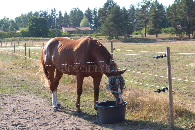 Ένα άλογο σε Högbo Bruk σε Sandviken στοκ εικόνες