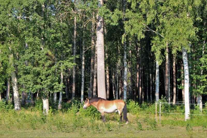 Ένα άλογο σε Högbo Bruk σε Sandviken στοκ φωτογραφία με δικαίωμα ελεύθερης χρήσης