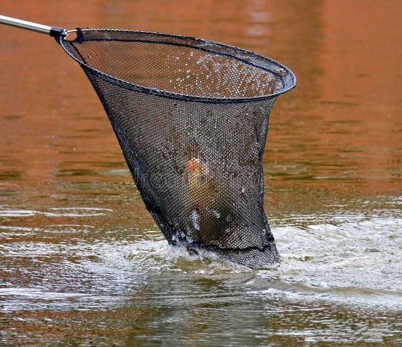 Ένα από τα πιό απαραίτητα στοιχεία στο οπλοστάσιο του ψαρά είναι ένα προσγειώνομαι-δίχτυ αλιείας Πρώτη αλιεία, μια επιτυχής σύλλη στοκ εικόνα