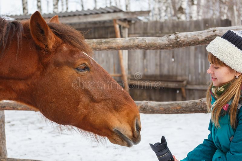 Ένα κορίτσι θέλει να πάρει μια εικόνα ενός αλόγου Κατευθύνει το φακό προς το άλογο στοκ φωτογραφία με δικαίωμα ελεύθερης χρήσης