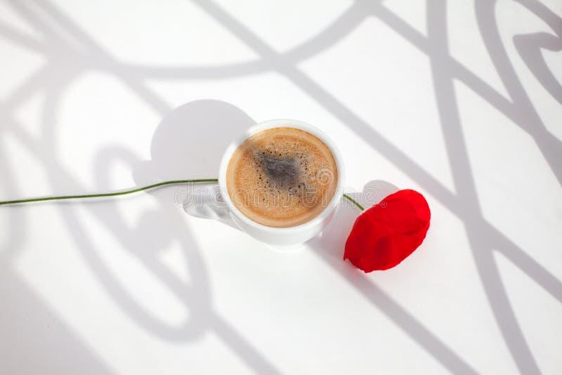 Ένα κόκκινο λουλούδι παπαρουνών στο άσπρο επιτραπέζιο υπόβαθρο με το φως ήλιων και οι σκιές κλείνουν επάνω τη τοπ άποψη στο φως τ στοκ φωτογραφίες