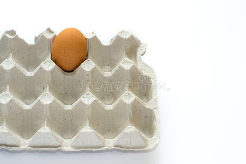 Ένα μόνο αυγό στον γκρίζο δίσκο αυγών χαρτοκιβωτίων που απομονώνεται στο άσπρο υπόβαθρο Τελευταία ευκαιρία να φάει Κατάταξη των τ στοκ εικόνα με δικαίωμα ελεύθερης χρήσης