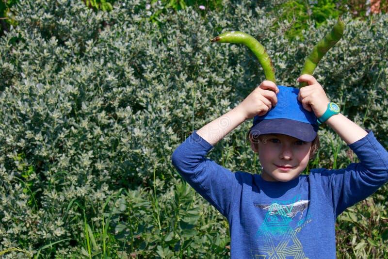 Ένα νέο αγόρι που κρατά δύο λοβούς ευρέων φασολιών επάνω από το κεφάλι του που προσποιείται να είναι ένα κουνέλι Κηπουρική παιδιώ στοκ εικόνα με δικαίωμα ελεύθερης χρήσης