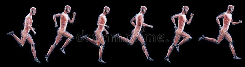 Ένα τρέξιμο επανδρώνει τους μυς απεικόνιση αποθεμάτων