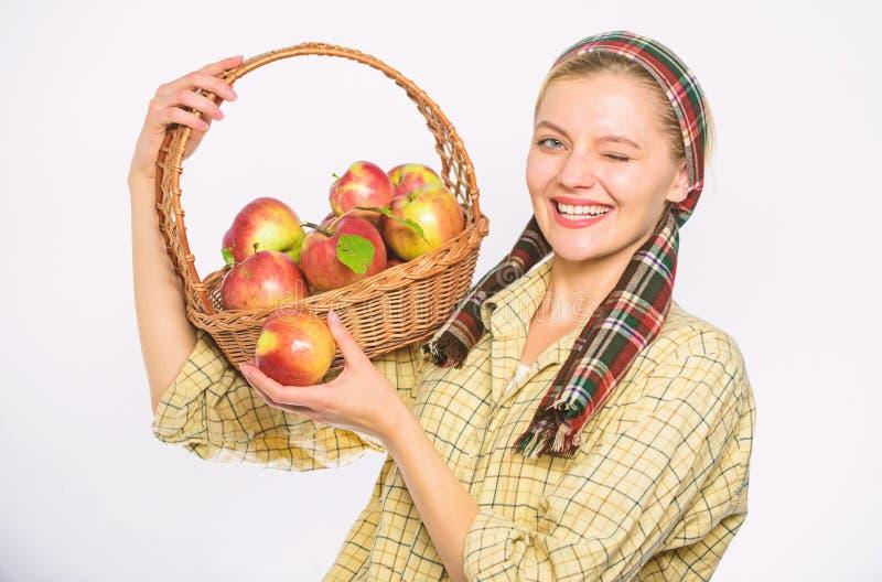 Έννοια συνταγής μαγείρων Ο χωρικός γυναικών φέρνει τα φυσικά φρούτα καλαθιών Αγροτικό καλάθι λαβής ύφους κηπουρών γυναικών με τα  στοκ φωτογραφίες