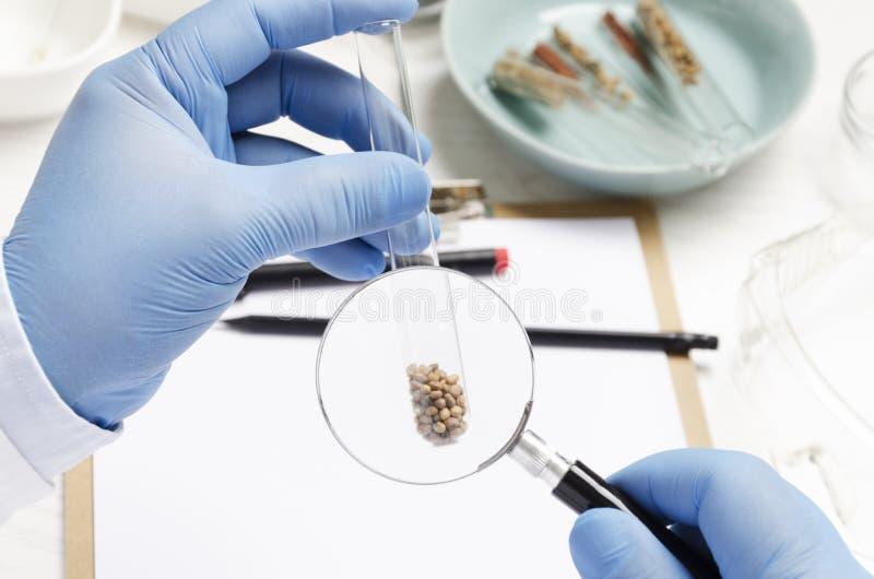 Έννοια της έρευνας του νέου είδους σπόρου στο αγρο εργαστήριο Ενίσχυση εκμετάλλευσης ατόμων - γυαλί και να ερευνήσει την ποιότητα στοκ εικόνα με δικαίωμα ελεύθερης χρήσης