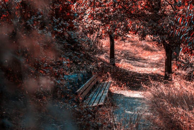Έδρα στο δάσος φθινοπώρου στοκ εικόνα με δικαίωμα ελεύθερης χρήσης