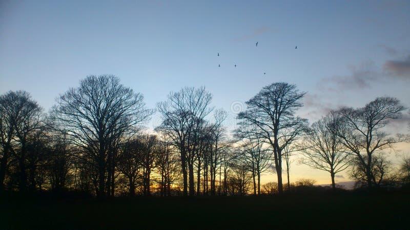Ήλιος που τίθεται στο πάρκο φύσης στοκ εικόνα