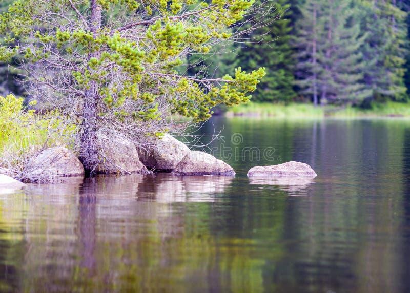 Ήρεμη σκηνή λιμνών βουνών με τα δέντρα πεύκων στοκ φωτογραφίες