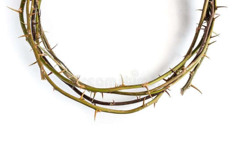 Αγκάθια κορωνών του Ιησούς Χριστού στο απομονωμένο άσπρο υπόβαθρο στοκ εικόνες με δικαίωμα ελεύθερης χρήσης