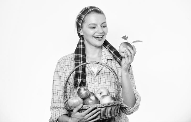 Αγροτικό καλάθι λαβής ύφους κηπουρών γυναικών με τα μήλα στο άσπρο υπόβαθρο Χρονική έννοια συγκομιδής Γυναίκα εύθυμη στοκ φωτογραφίες με δικαίωμα ελεύθερης χρήσης