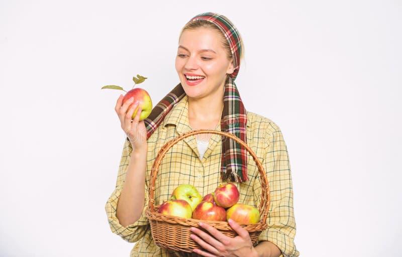 Αγροτικό καλάθι λαβής ύφους κηπουρών γυναικών με τα μήλα στο άσπρο υπόβαθρο Χρονική έννοια συγκομιδής Γυναίκα εύθυμη στοκ εικόνα