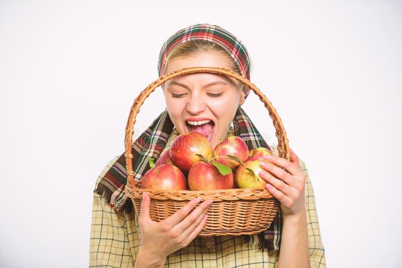 Αγροτικό καλάθι λαβής ύφους κηπουρών γυναικών με τα μήλα στο άσπρο υπόβαθρο Ο χωρικός γυναικών φέρνει τα φυσικά φρούτα καλαθιών στοκ φωτογραφία