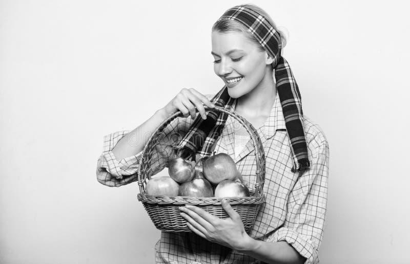 Αγροτικό καλάθι λαβής ύφους κηπουρών γυναικών με τη συγκομιδή μήλων στο ελαφρύ υπόβαθρο Γυναικείος αγρότης ή κηπουρός υπερήφανος  στοκ φωτογραφία με δικαίωμα ελεύθερης χρήσης
