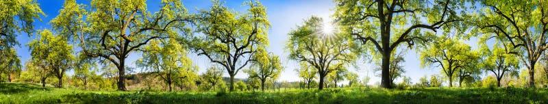 Αγροτικό τοπίο μια λαμπρή ηλιόλουστη ημέρα άνοιξη στοκ εικόνα