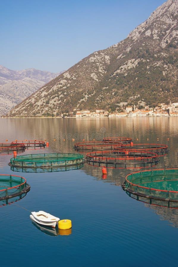 Αγρόκτημα ψαριών στην αδριατική θάλασσα όμορφη Μεσόγειος τοπίων Μαυροβούνιο, κόλπος Kotor στοκ εικόνες