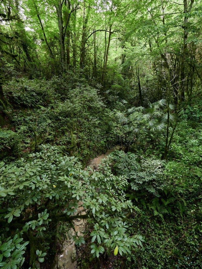 Αλσύλλιο του πυκνού πράσινου δάσους με το στεγνωμένο ρεύμα στοκ εικόνες