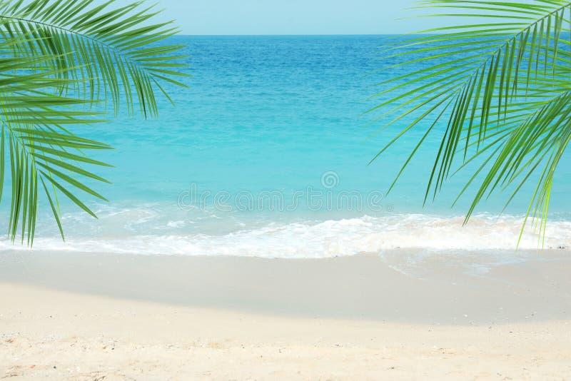 Αμμώδης ωκεάνια παραλία και τροπικά φύλλα φοινικών στοκ εικόνες