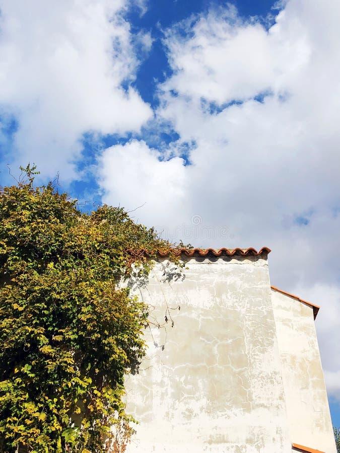 Αναρριμένος στο φυτό με τα πράσινα φύλλα στον τοίχο του σπιτιού το φθινόπωρο με το παλαιό ασβεστοκονίαμα στοκ εικόνες