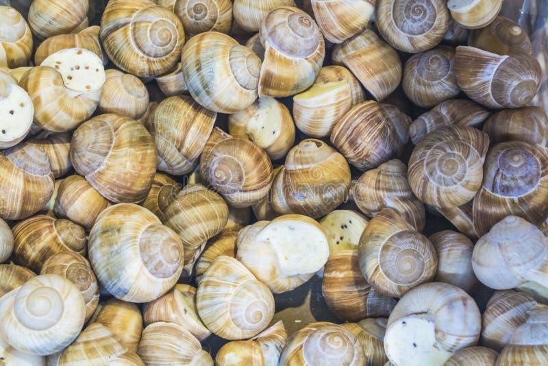 ανασκόπηση ή σύσταση Τα γεμισμένα σαλιγκάρια γαλλικός πίνακας τροφίμων ψαριών γευμάτων προϊόντα λιχουδιά Ένα πιάτο για τα gourmet στοκ φωτογραφία με δικαίωμα ελεύθερης χρήσης