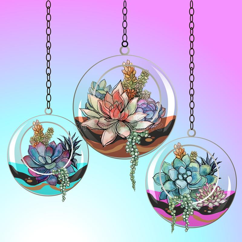 Ανθίζει succulents στα δοχεία γυαλιού διάνυσμα ελεύθερη απεικόνιση δικαιώματος