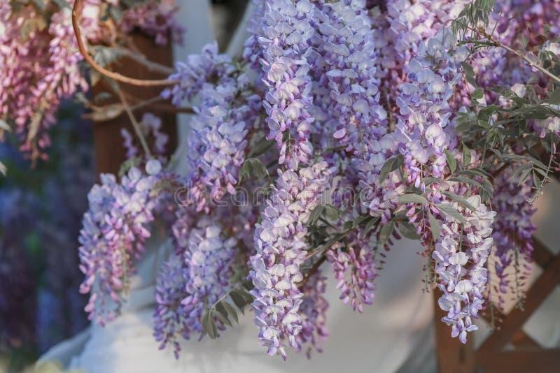 Ανθίζοντας ιώδη λουλούδια σε ένα δέντρο ο κήπος στοκ εικόνα
