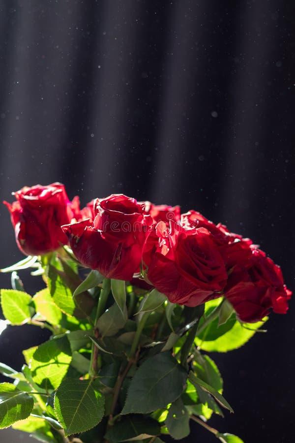 Ανθοδέσμη των τριαντάφυλλων στον ήλιο στοκ εικόνες