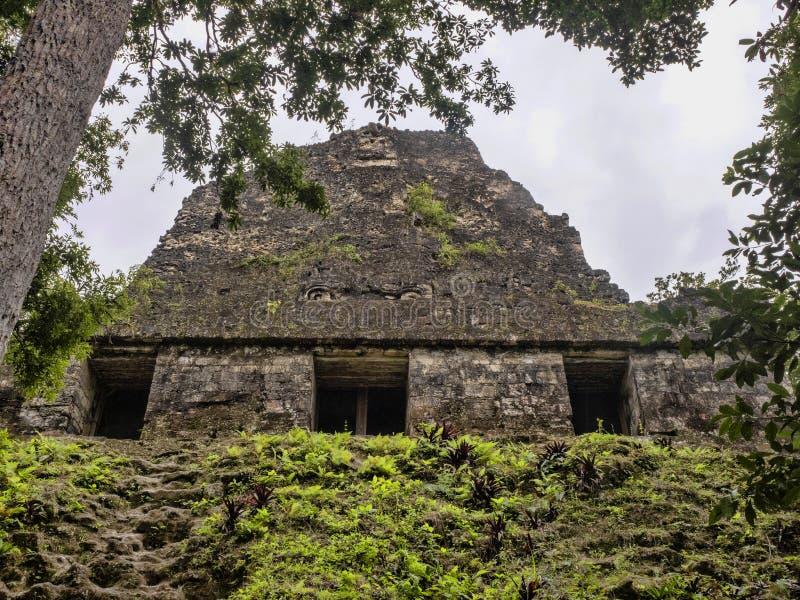 Αριθμός 54of ναών η σημαντικότερη των Μάγια πόλη του έθνους του πάρκου Tikal, Γουατεμάλα στοκ εικόνες
