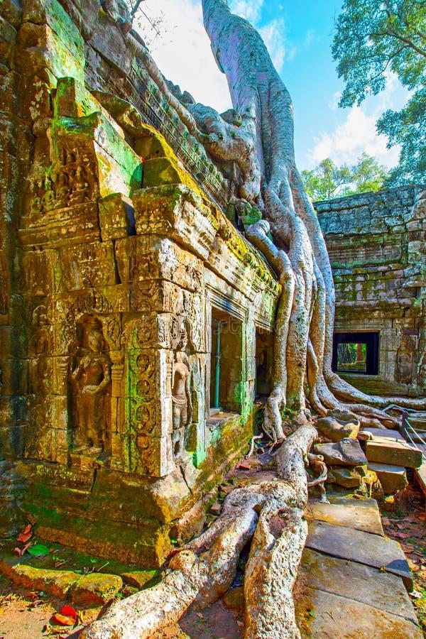 Αρχαίες καταστροφές του ναού TA Prohm στοκ φωτογραφία με δικαίωμα ελεύθερης χρήσης