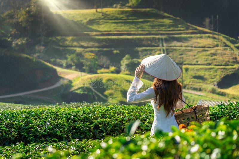 Ασιατική γυναίκα που φορά τον πολιτισμό του Βιετνάμ παραδοσιακό στον πράσινο τομέα τσαγιού στοκ φωτογραφίες