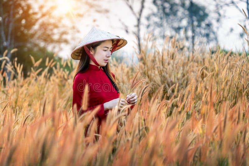 Ασιατική γυναίκα που φορά τον πολιτισμό του Βιετνάμ παραδοσιακό στον αφρικανικό τομέα λουλουδιών πηγών στοκ φωτογραφίες
