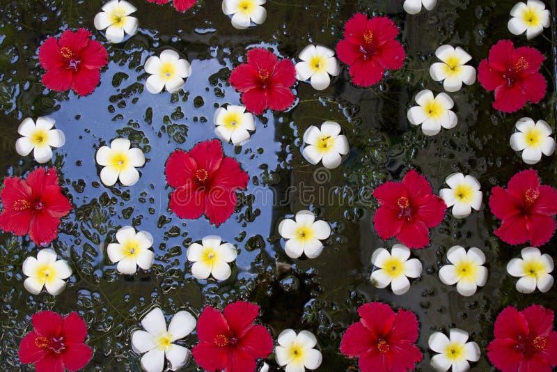 Ασιατική διακόσμηση μιας λίμνης στοκ φωτογραφία