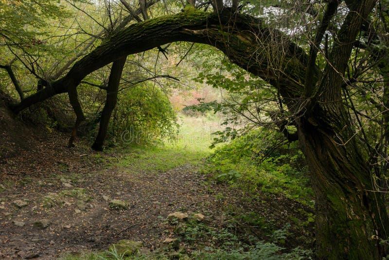 Αψίδα που δημιουργείται φυσική από ένα δέντρο ιτιών στοκ εικόνα