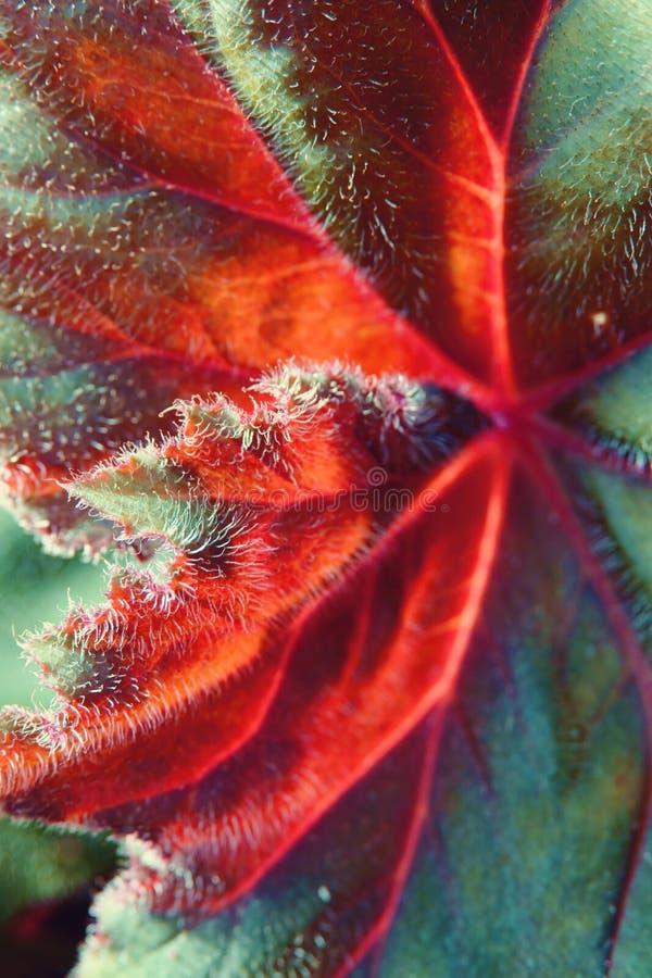Αφηρημένος μισός πράσινος και κατά το ήμισυ ξηρός φθινοπώρου φύλλων στενός επάνω εστίασης υποβάθρου εκλεκτικός στοκ εικόνες