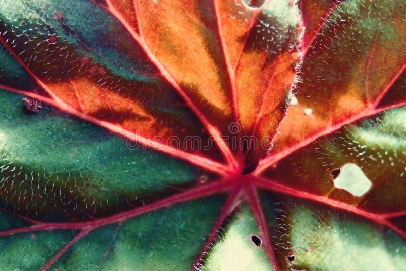Αφηρημένος μισός πράσινος και κατά το ήμισυ ξηρός φθινοπώρου φύλλων στενός επάνω εστίασης υποβάθρου εκλεκτικός στοκ φωτογραφία με δικαίωμα ελεύθερης χρήσης
