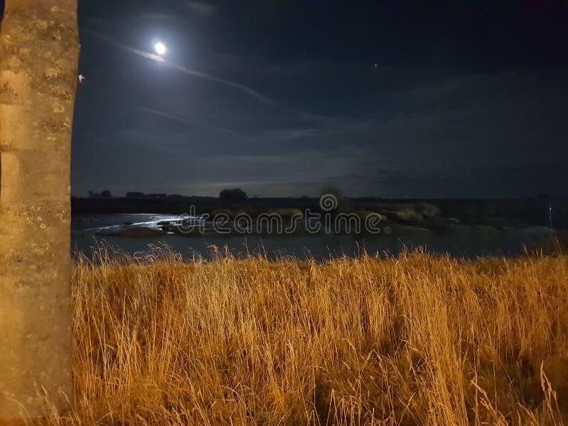 Αφηρημένο δέντρο πετρών νερού νύχτας φεγγαριών στοκ εικόνα με δικαίωμα ελεύθερης χρήσης