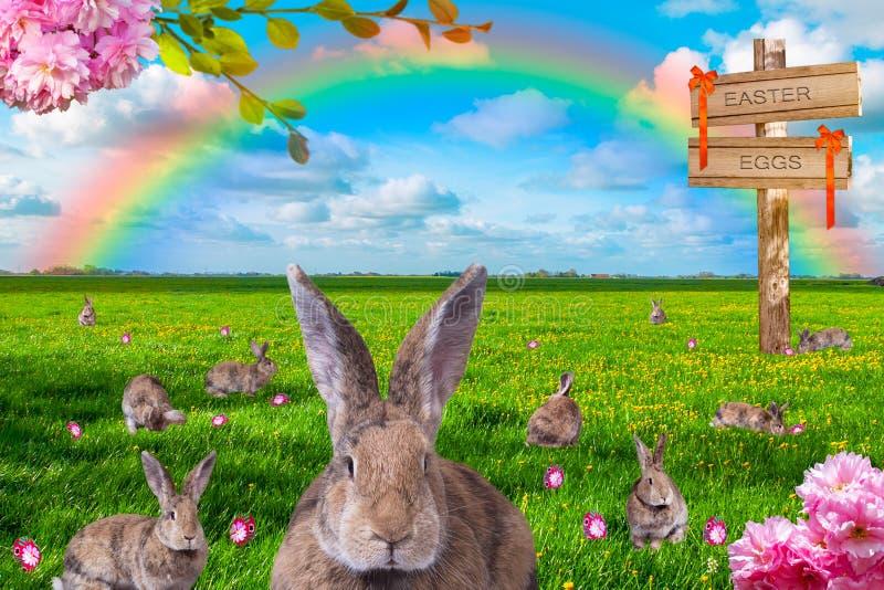 Αφθονία των κουνελιών με τα χρωματισμένα αυγά Πάσχας στο πράσινο λιβάδι με το ουράνιο τόξο στο υπόβαθρο στοκ φωτογραφίες