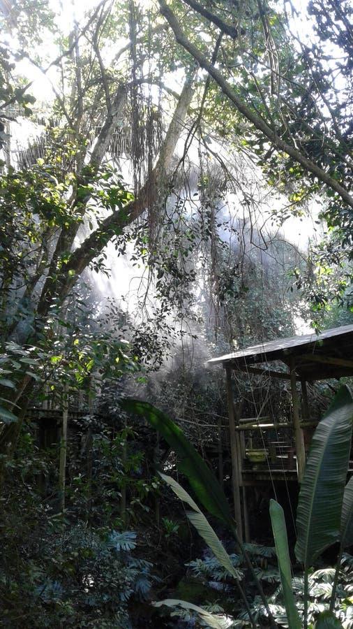 Αφρικανική ζούγκλα στοκ εικόνα