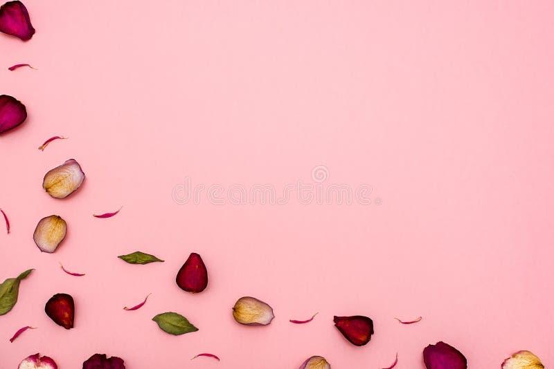 Αυξήθηκε καφέ και πράσινα φύλλα πετάλων σε ένα ρόδινο υπόβαθρο κορυφαία όψη Κενό για τα συγχαρητήρια, κάρτες στοκ φωτογραφία με δικαίωμα ελεύθερης χρήσης