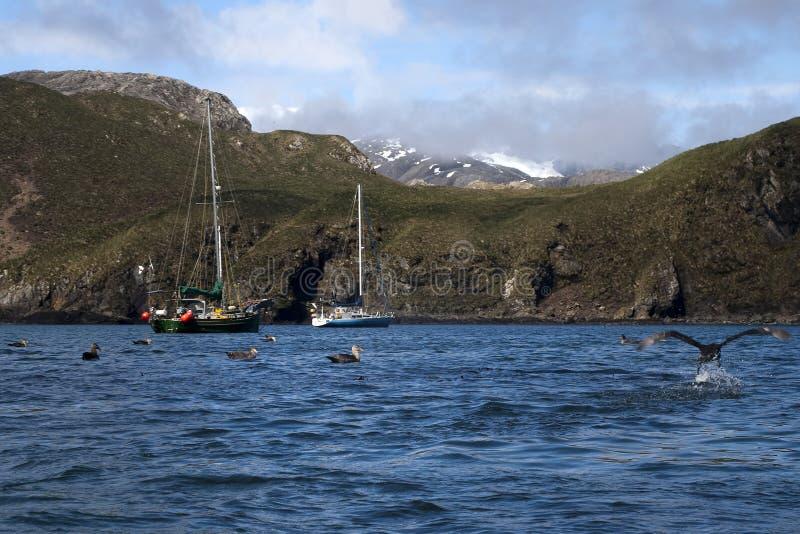 Βάρκες που δένονται στον κόλπο με τα νότια γιγαντιαία πουλιά προκελλαριών στο νερό στοκ εικόνα