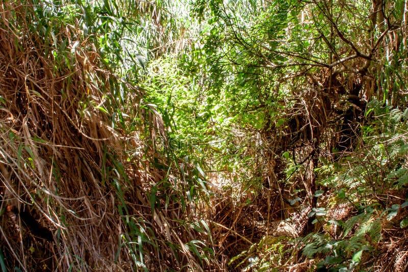 Βαθιά άποψη στο τροπικό δάσος με τον ποταμό στοκ εικόνες