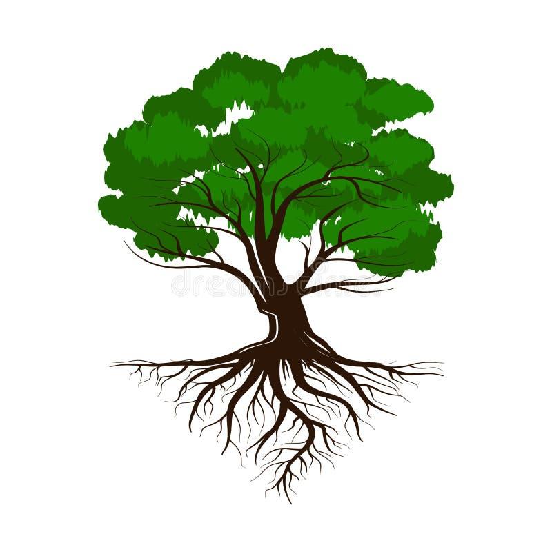 Βαλανιδιά ένα πράσινο δέντρο ζωής με τις ρίζες και τα φύλλα Διανυσματικό εικονίδιο απεικόνισης που απομονώνεται στο άσπρο υπόβαθρ διανυσματική απεικόνιση