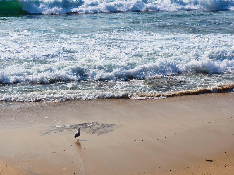 Βαριά κύματα που συντρίβουν επάνω στην παραλία Cronulla, Αυστραλία στοκ εικόνα με δικαίωμα ελεύθερης χρήσης