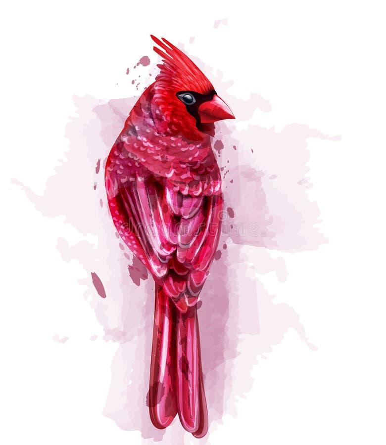 Βασικό κόκκινο διάνυσμα watercolor πουλιών απομονωμένος στις άσπρες απεικονίσεις απεικόνιση αποθεμάτων
