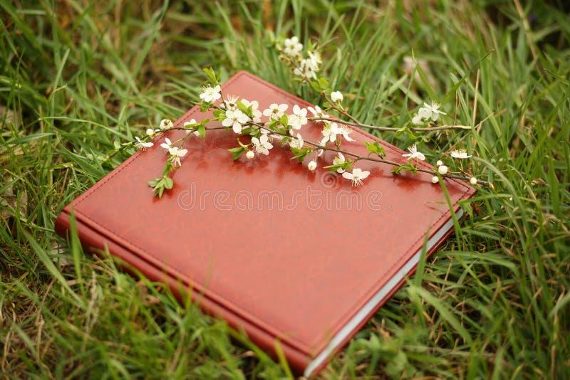 Βιβλίο φωτογραφιών στη χλόη Ένα δέρμα photobook σε μια χλόη με έναν κλάδο του ανθίζοντας κερασιού στοκ εικόνα