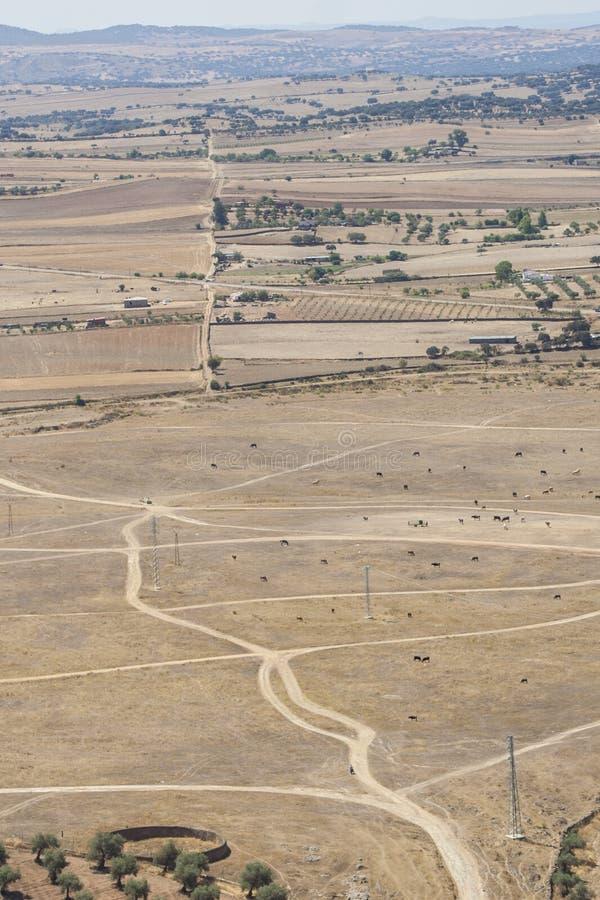 Βοσκή βοοειδών στην περιοχή θερινού λιβαδιού στα ημιάγονα κλίματα στοκ φωτογραφία με δικαίωμα ελεύθερης χρήσης
