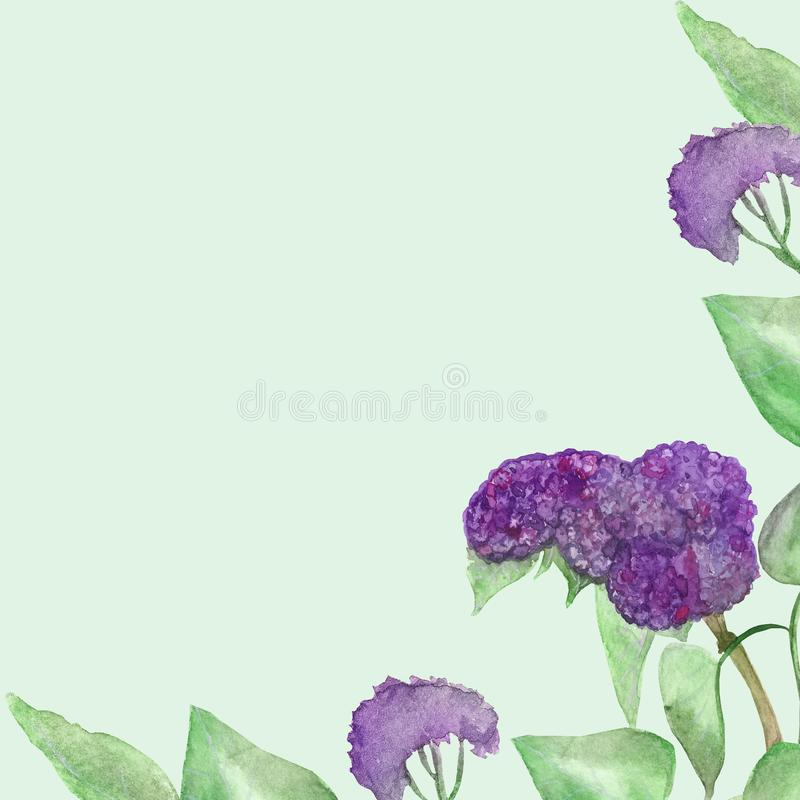 Βοτανικοί σχέδιο-πολύβλαστοι ανθίζοντας κλάδοι watercolor της πασχαλιάς τα πράσινα φύλλα που απομονώνονται με στο υπόβαθρο μεντών διανυσματική απεικόνιση