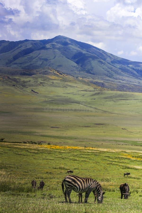 Βουνό, πεδιάδα χλόης με ένα με ραβδώσεις στο πρώτο πλάνο στοκ εικόνα