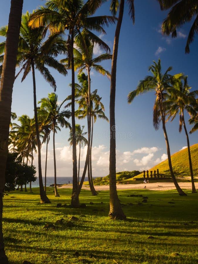 Βόστρυχος φοινικών στην παραλία Anakena στο νησί Πάσχας, Χιλή Moais Nau Nau Ahu στην πλάτη στοκ εικόνες με δικαίωμα ελεύθερης χρήσης