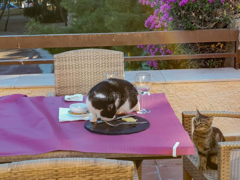 Γάτες που πελεκούν τα τρόφιμα από έναν πίνακα στοκ φωτογραφία με δικαίωμα ελεύθερης χρήσης